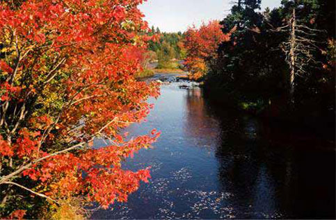 Travel in canada in the fall can be a wonderful experince whether you are disabled or not
